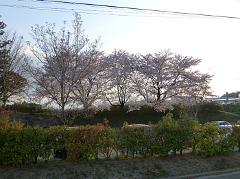 hanami001